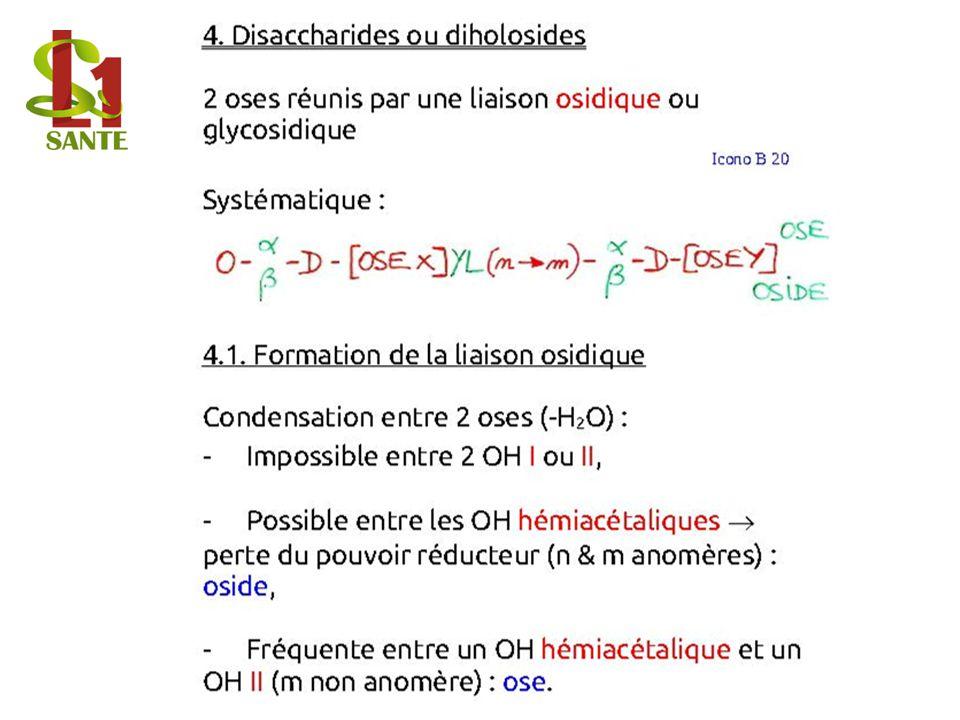 4. Disaccharides ou diholosides
