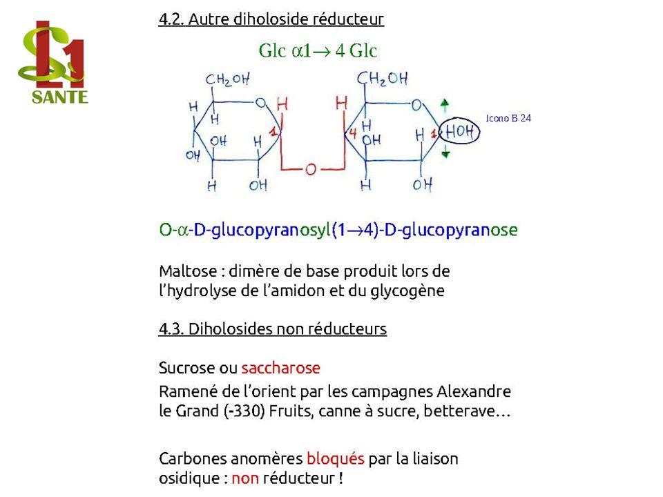 4.2. Autre diholoside réducteur