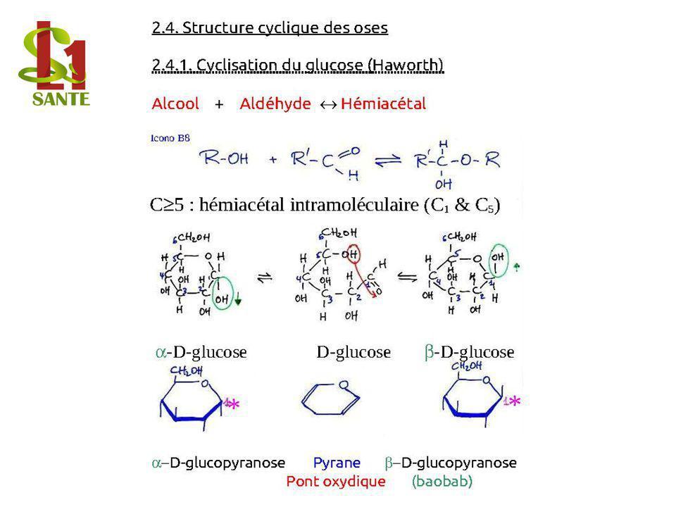 2. 4. Structure cyclique des oses