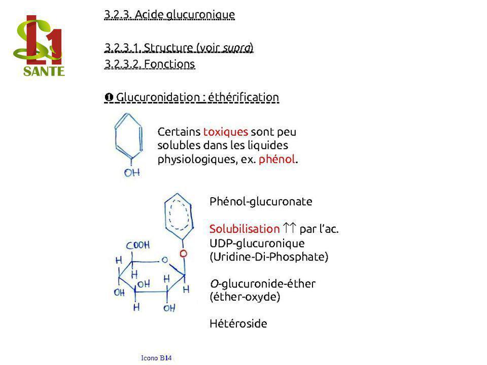 3.2.3. Acide glucuronique
