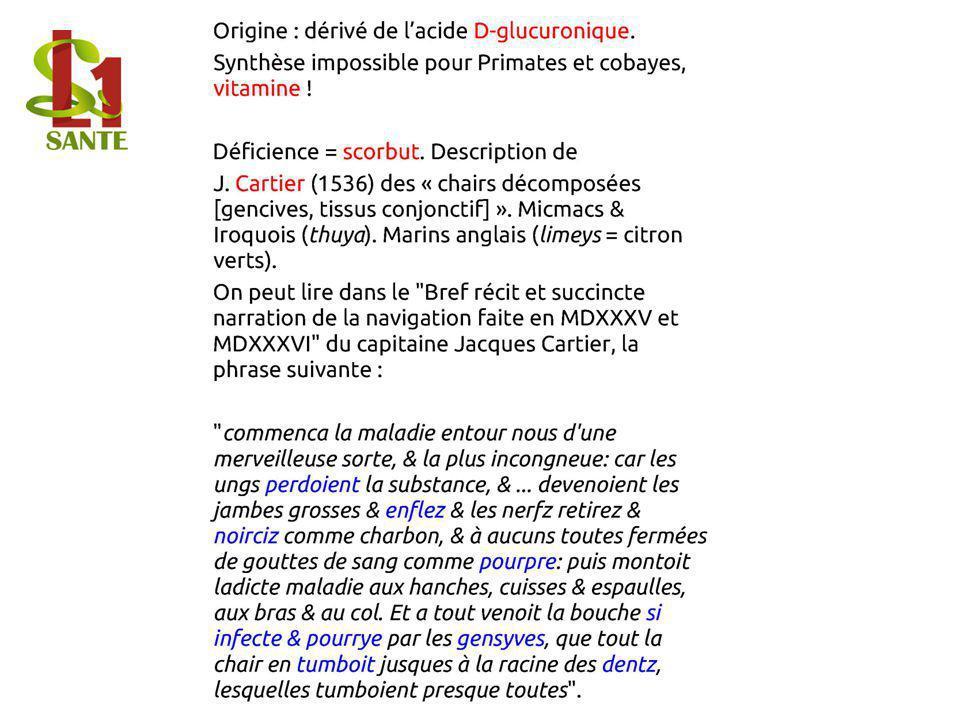 Origine : dérivé de lacide D- glucuro nique. Synthès e impossi ble pour Primate s et cobaye s, vitamin e !