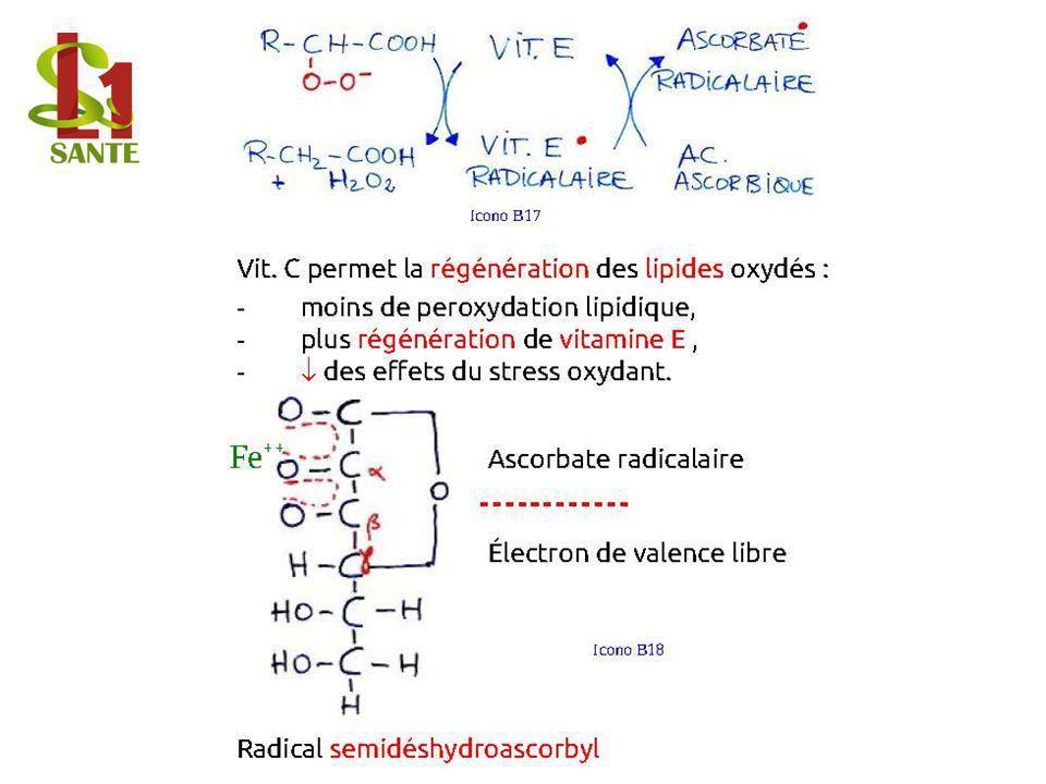 Vit. C permet la régénération des lipides oxydés : - moins de peroxydation lipidique, - plus régénération de vitamine E, - des effets du stress oxydan