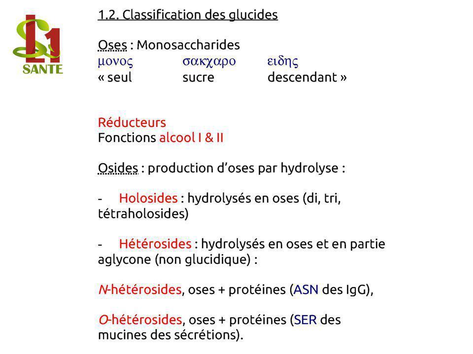 1.2. Classification des glucides