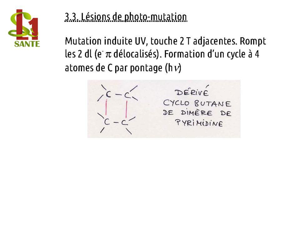 3.3. Lésions de photo-mutation
