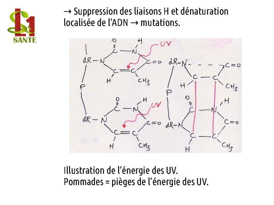 Suppre ssion des liaisons H et dénatur ation localisé e de lADN mutatio ns.