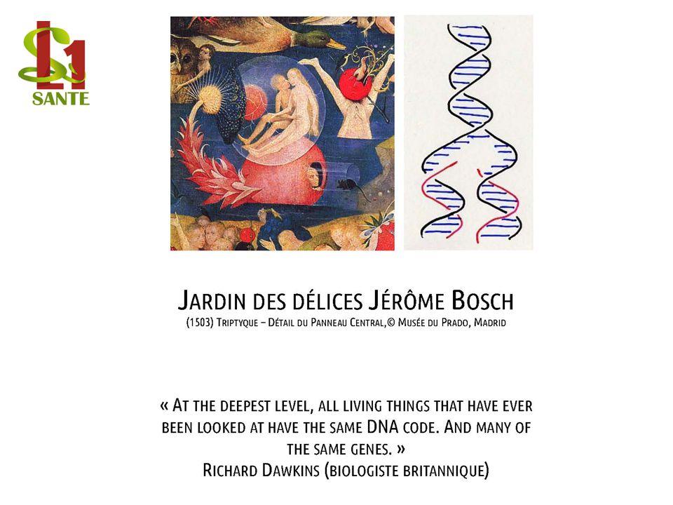 JARDIN DES DÉLICES JÉRÔME BOSCH (1503) TRIPTYQUE – DÉTAIL DU PANNEAU CENTRAL,© MUSÉE DU PRADO, MADRID