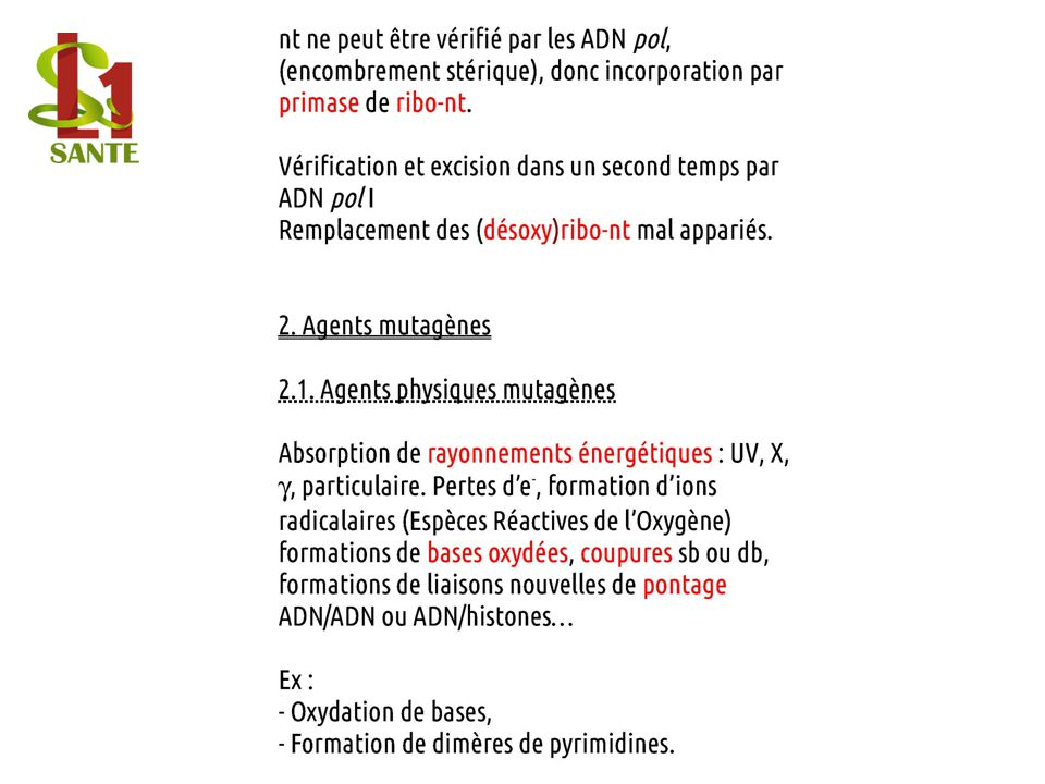 nt ne peut être vérifié par les ADN pol, (encombrement stérique), donc incorporation par primase de ribo-nt.