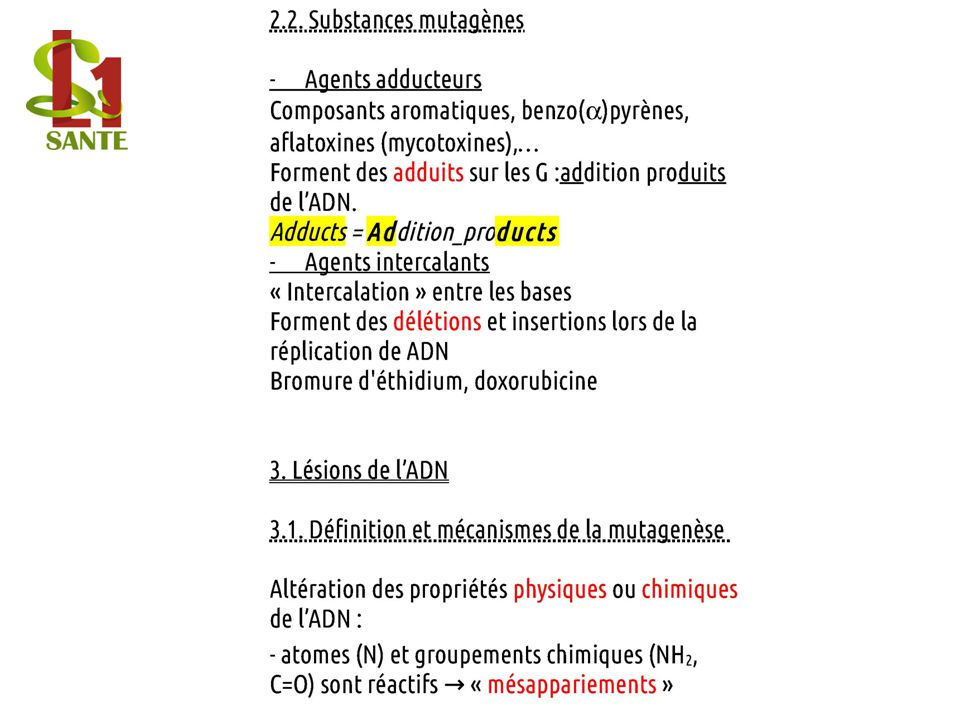de bases mutations fixées, - lésions distorsions de lADN, altération de la réplication.