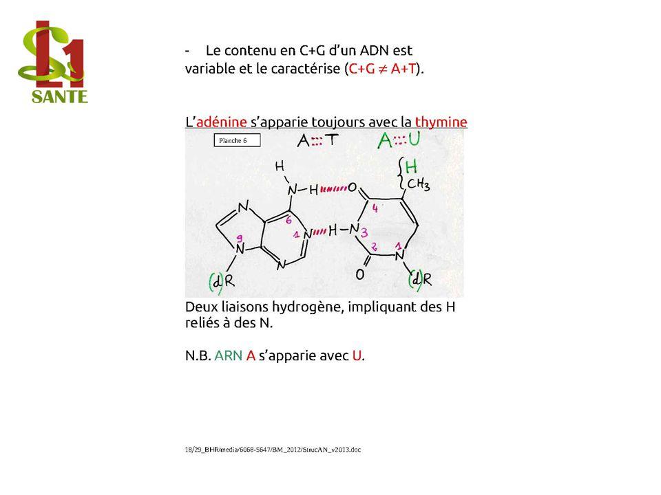 Le contenu en C+G dun ADN est variable et le caractérise (C+G ¹ A+T).