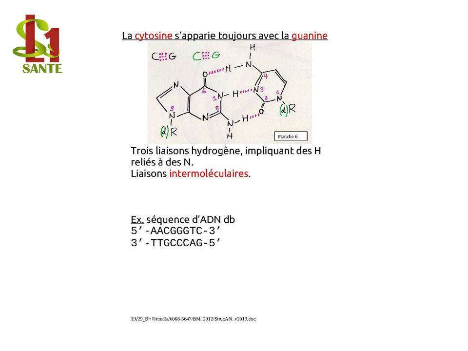 6. Structure des ARNt et modification de bases