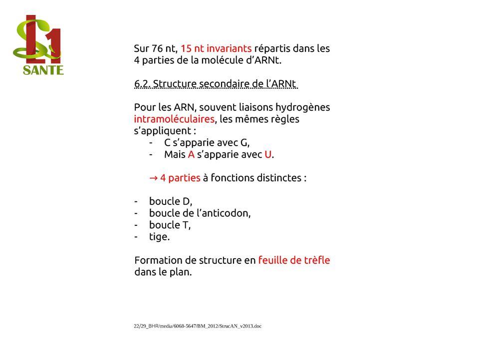 6.2. Structure secondaire de lARNt