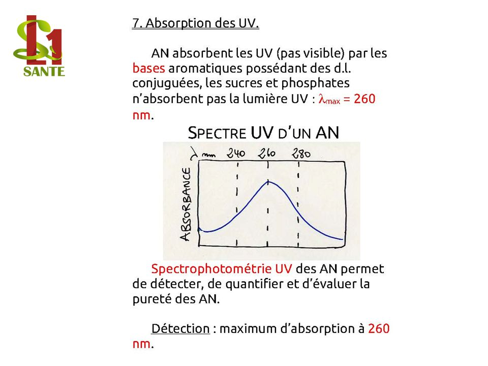 7. Absorption des UV.