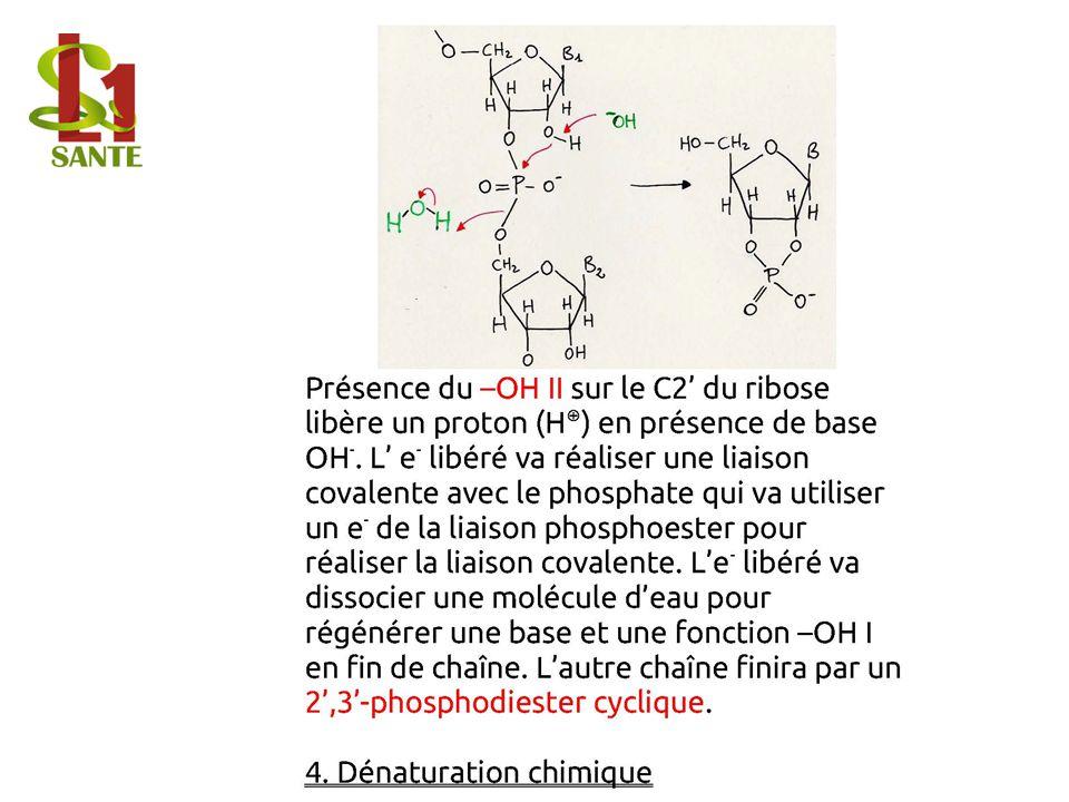 4. Dénaturation chimique