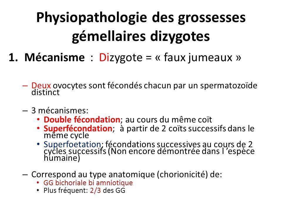 Physiopathologie des grossesses gémellaires dizygotes 1.Mécanisme : Dizygote = « faux jumeaux » – Deux ovocytes sont fécondés chacun par un spermatozo