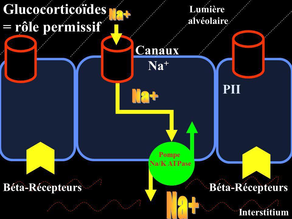 PII Canaux Na + Pompe Na/K ATPase Lumière alvéolaire Interstitium Béta-Récepteurs Glucocorticoïdes = rôle permissif