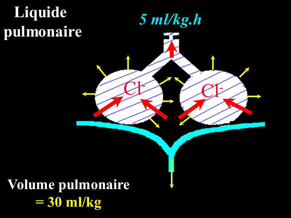 Naissance (de 0 à 30 min) Réabsorption du liquide pulmonaire Ventilation Na + Travail + Hormones de stress H2OH2O Na + H2OH2O H2OH2O H2OH2O
