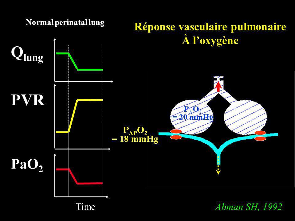 PVR PaO 2 Time Q lung Normal perinatal lung Réponse vasculaire pulmonaire À loxygène Abman SH, 1992
