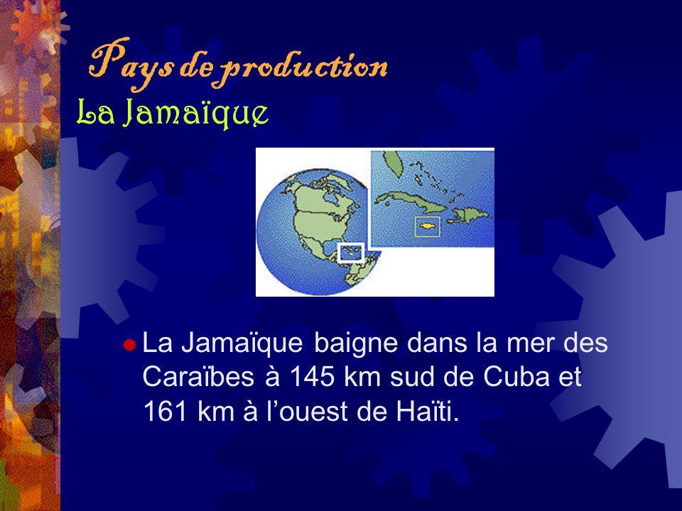 Pays de production La Jamaïque baigne dans la mer des Caraïbes à 145 km sud de Cuba et 161 km à louest de Haïti. La Jamaïque