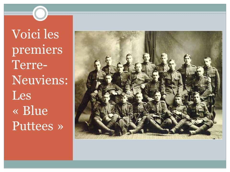 Voici les premiers Terre- Neuviens: Les « Blue Puttees »