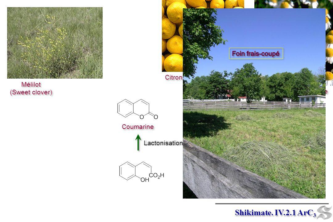 Mélilot (Sweet clover) Mélilot (Sweet clover) Camomille Citrons Umbelliférone Lactonisation Coumarine Lactonisation Shikimate. IV.2.1 ArC 3