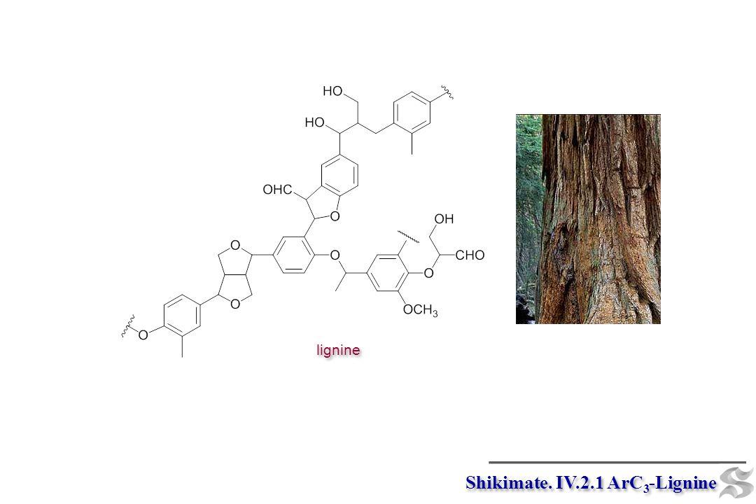 Shikimate. IV.2.1 ArC 3 -Lignine lignine