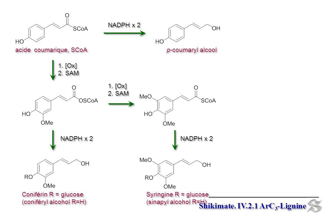 acide coumarique, SCoA p-coumaryl alcool 1. [Ox] 2. SAM 1. [Ox] 2. SAM NADPH x 2 1. [Ox] 2. SAM 1. [Ox] 2. SAM NADPH x 2 Coniférin R = glucose (conifé