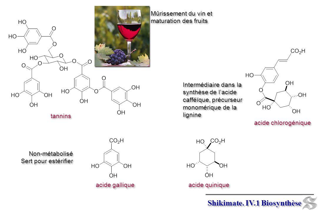 Non-métabolisé Sert pour estérifier Non-métabolisé Sert pour estérifier tannins Mûrissement du vin et maturation des fruits Intermédiaire dans la synthèse de lacide cafféïque, précurseur monomérique de la lignine acide chlorogénique acide quinique acide gallique Shikimate.