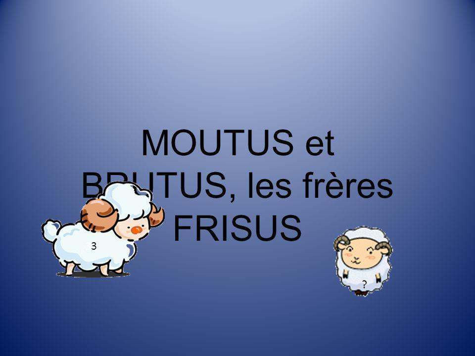 MOUTUS et BRUTUS, les frères FRISUS ? 3