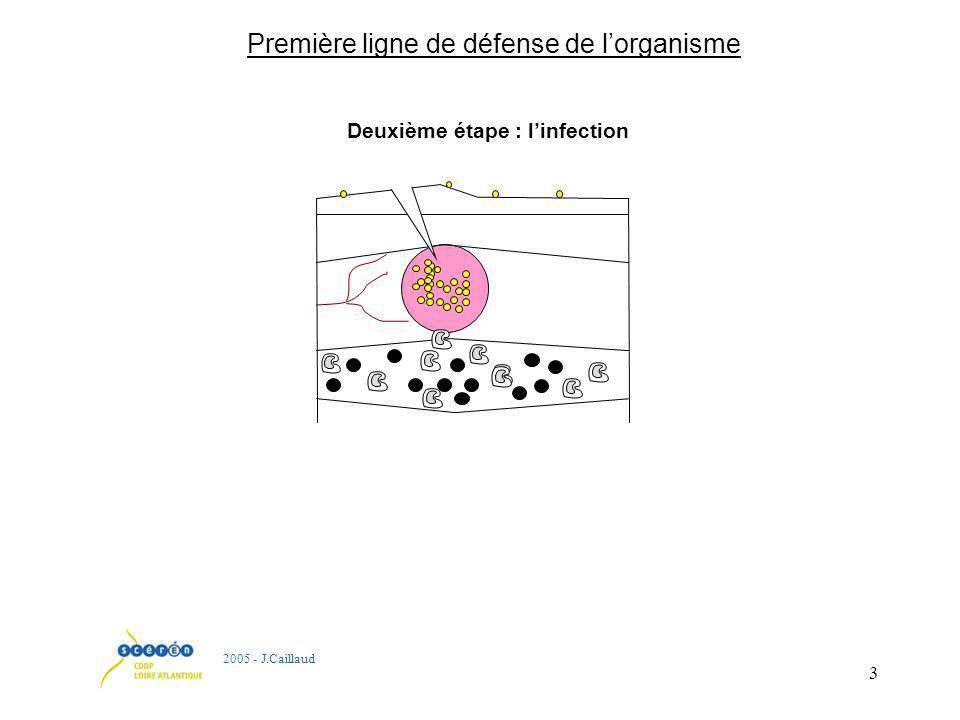 3 Deuxième étape : linfection 2005 - J.Caillaud Première ligne de défense de lorganisme