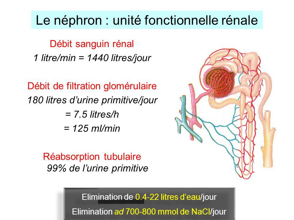 Le néphron : unité fonctionnelle rénale Débit sanguin rénal 1 litre/min = 1440 litres/jour Débit de filtration glomérulaire 180 litres durine primitiv