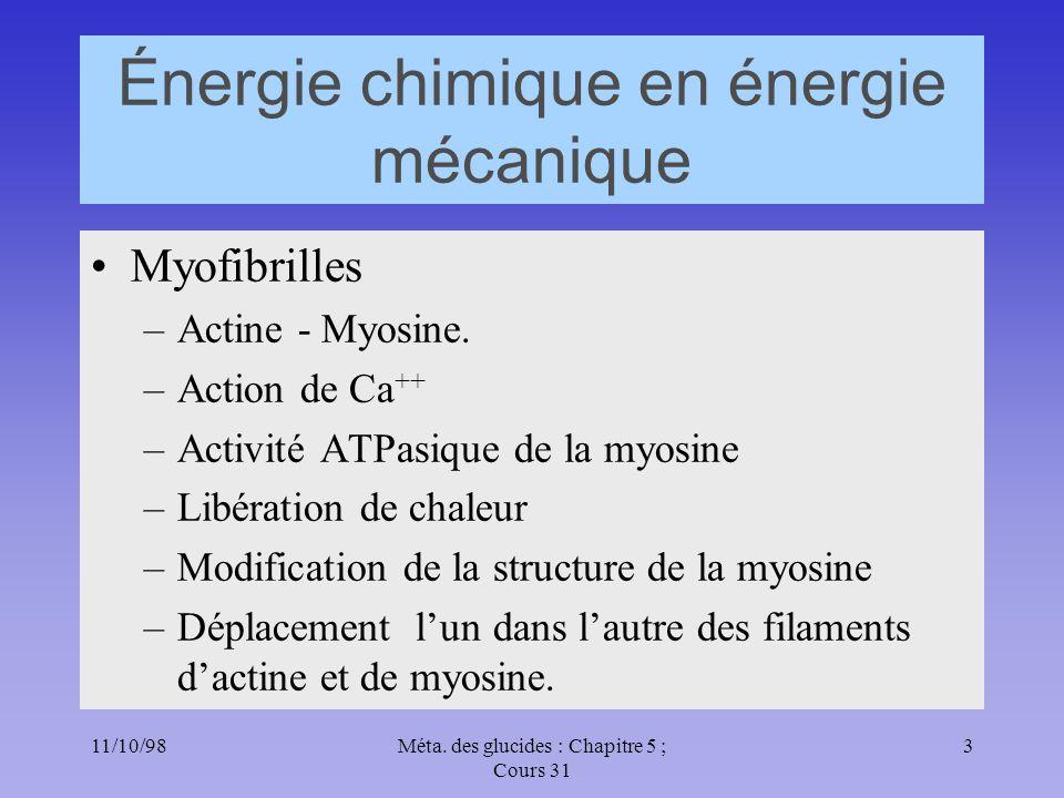 11/10/983Méta. des glucides : Chapitre 5 ; Cours 31 Énergie chimique en énergie mécanique Myofibrilles –Actine - Myosine. –Action de Ca ++ –Activité A