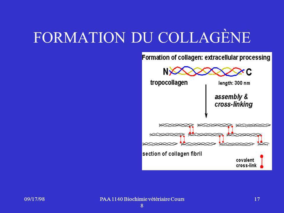 09/17/9817PAA 1140 Biochimie vétériaire Cours 8 FORMATION DU COLLAGÈNE
