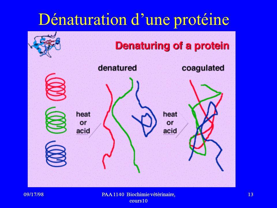 09/17/9813PAA 1140 Biochimie vétérinaire, cours10 Dénaturation dune protéine