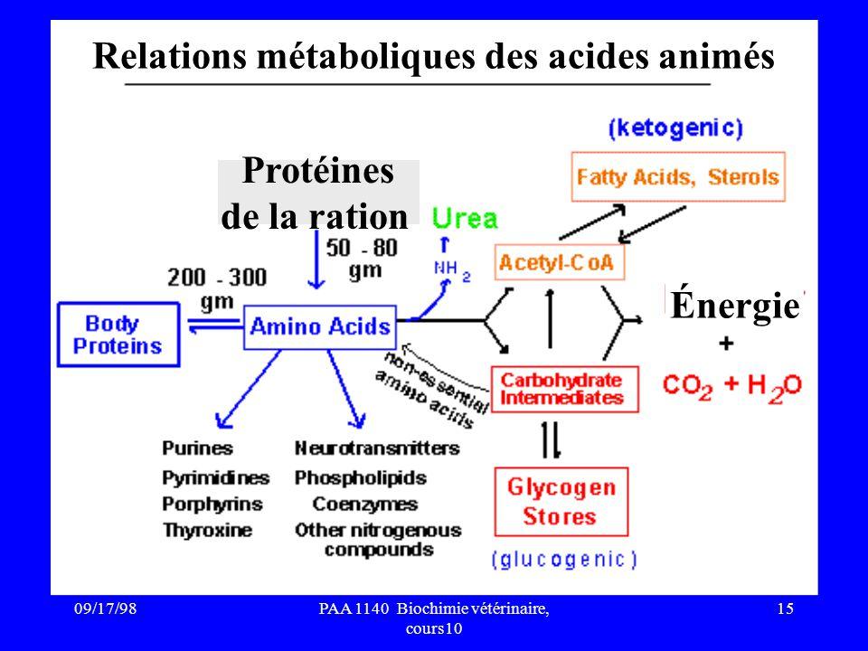 09/17/9815PAA 1140 Biochimie vétérinaire, cours10 Énergie Relations métaboliques des acides animés Protéines de la ration