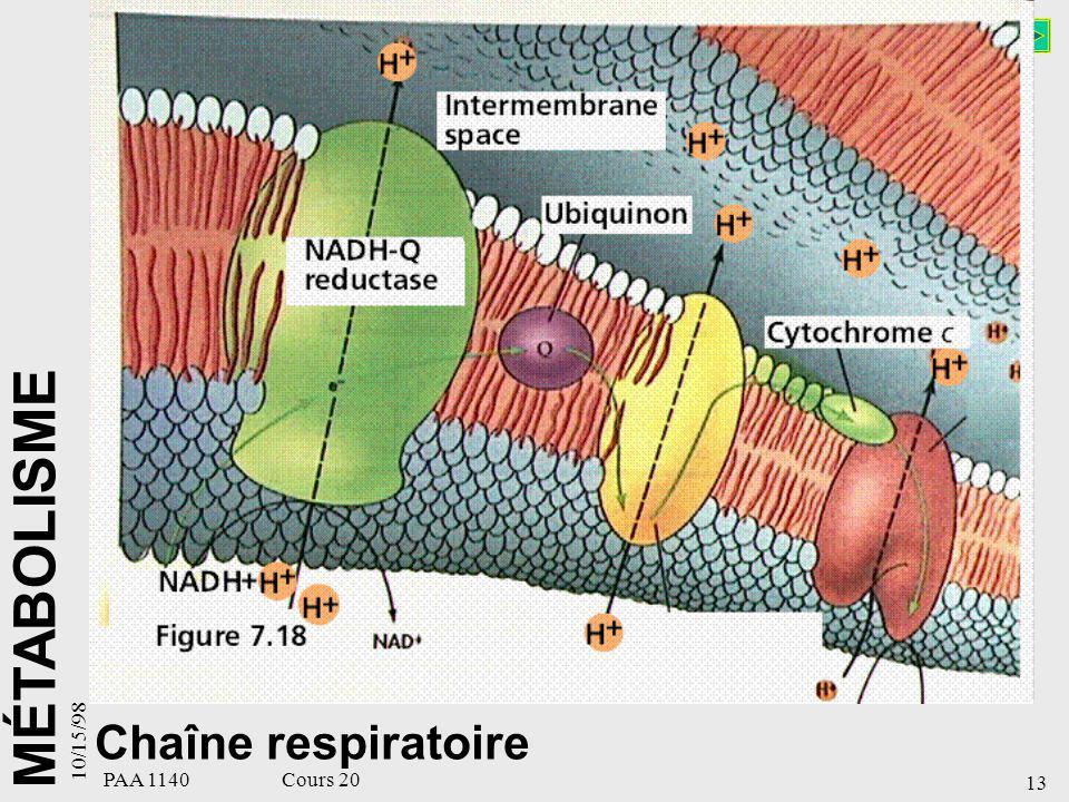 MÉTABOLISME 10/15/98 13 PAA 1140 Cours 20 Chaîne respiratoire