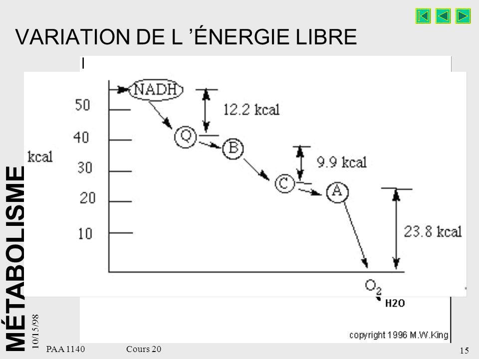 MÉTABOLISME 10/15/98 15 PAA 1140 Cours 20 VARIATION DE L ÉNERGIE LIBRE