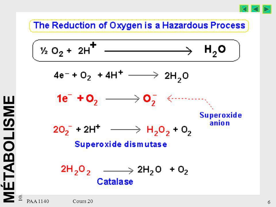 MÉTABOLISME 10/15/98 7 PAA 1140 Cours 20 Oxydation biologique Enzymes et coenzymes impliqués dans les phénomènes d oxydoréduction –Oxydases.