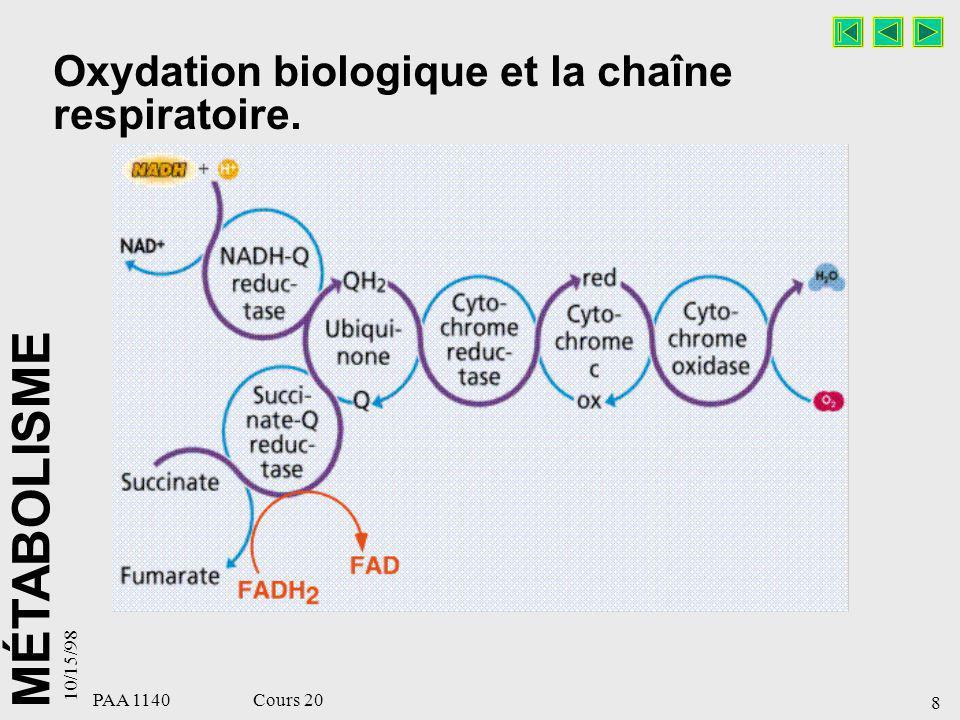 MÉTABOLISME 10/15/98 8 PAA 1140 Cours 20 Oxydation biologique et la chaîne respiratoire.