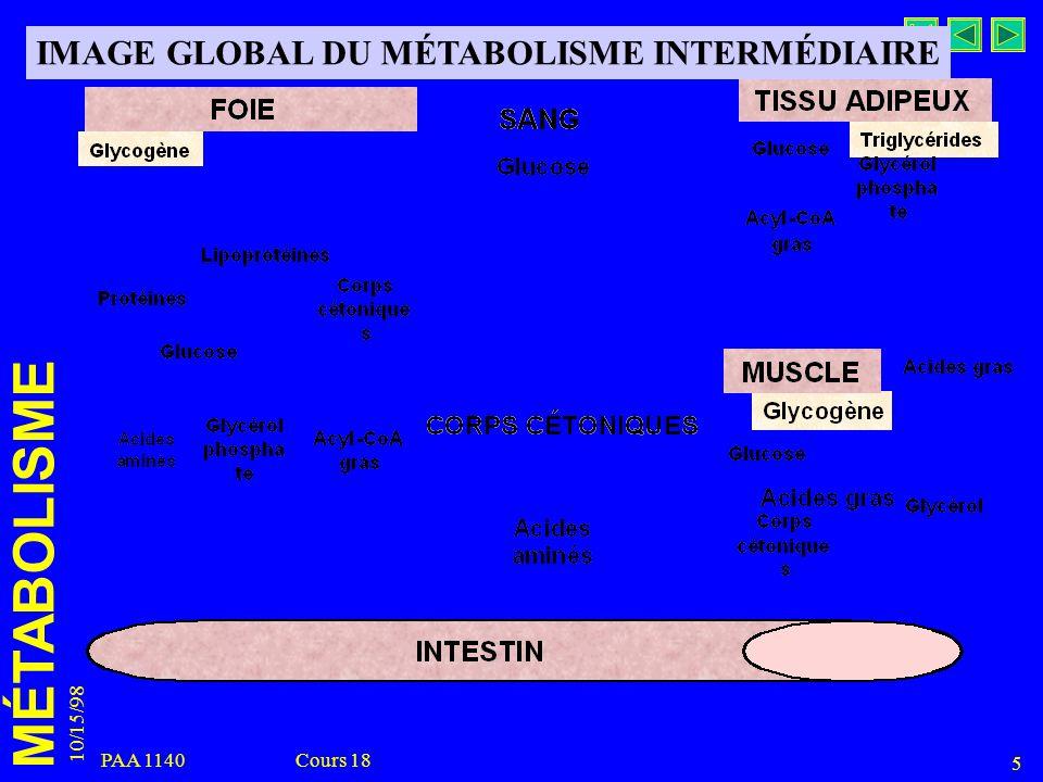 MÉTABOLISME 10/15/98 5 PAA 1140 Cours 18 IMAGE GLOBAL DU MÉTABOLISME INTERMÉDIAIRE