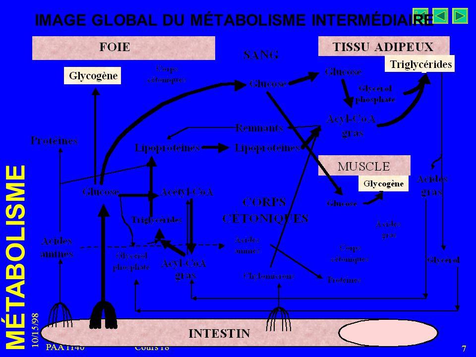 MÉTABOLISME 10/15/98 7 PAA 1140 Cours 18 IMAGE GLOBAL DU MÉTABOLISME INTERMÉDIAIRE