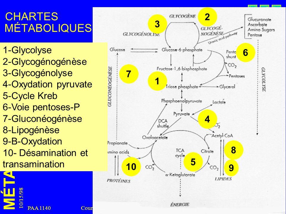 MÉTABOLISME 10/15/98 8 PAA 1140 Cours 18 CHARTES MÉTABOLIQUES 1 1-Glycolyse 2-Glycogénogénèse 3-Glycogénolyse 4-Oxydation pyruvate 5-Cycle Kreb 6-Voie