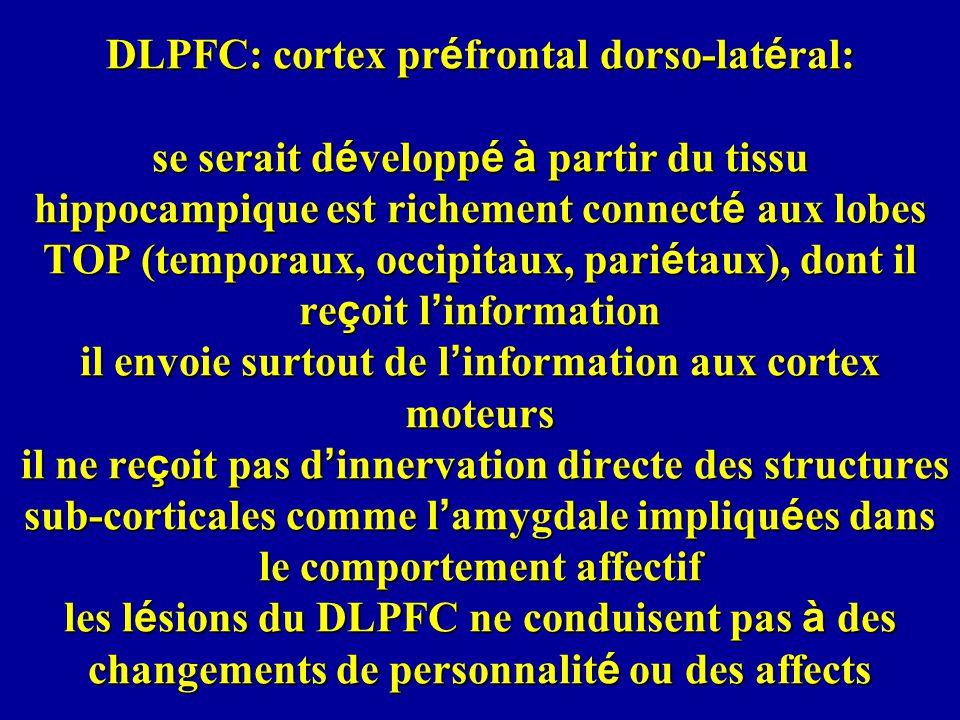 DLPFC: cortex pr é frontal dorso-lat é ral: se serait d é velopp é à partir du tissu hippocampique est richement connect é aux lobes TOP (temporaux, o