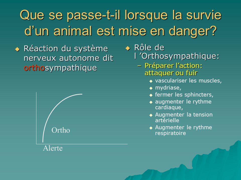 Que se passe-t-il lorsque la survie dun animal est mise en danger? Réaction du système nerveux autonome dit orthosympathique Réaction du système nerve