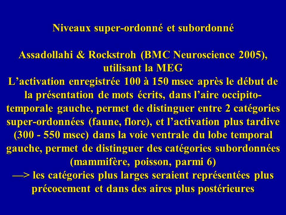 Niveaux super-ordonné et subordonné Assadollahi & Rockstroh (BMC Neuroscience 2005), utilisant la MEG Lactivation enregistrée 100 à 150 msec après le