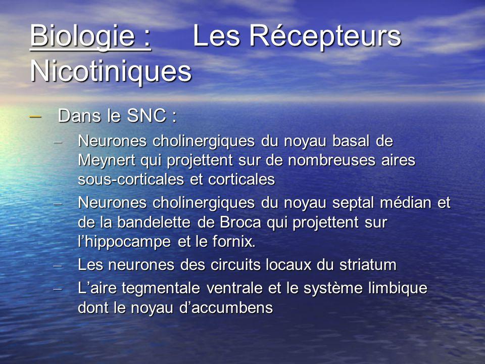 Biologie : Les Récepteurs Nicotiniques – Dans le SNC : – Neurones cholinergiques du noyau basal de Meynert qui projettent sur de nombreuses aires sous