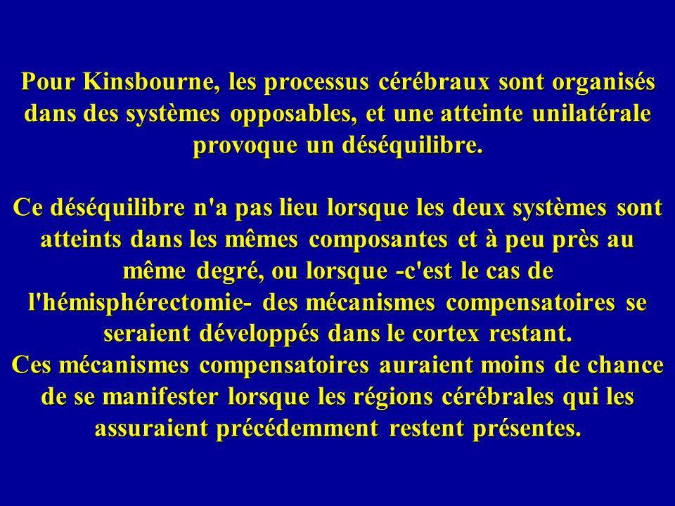 Pour Kinsbourne, les processus cérébraux sont organisés dans des systèmes opposables, et une atteinte unilatérale provoque un déséquilibre.