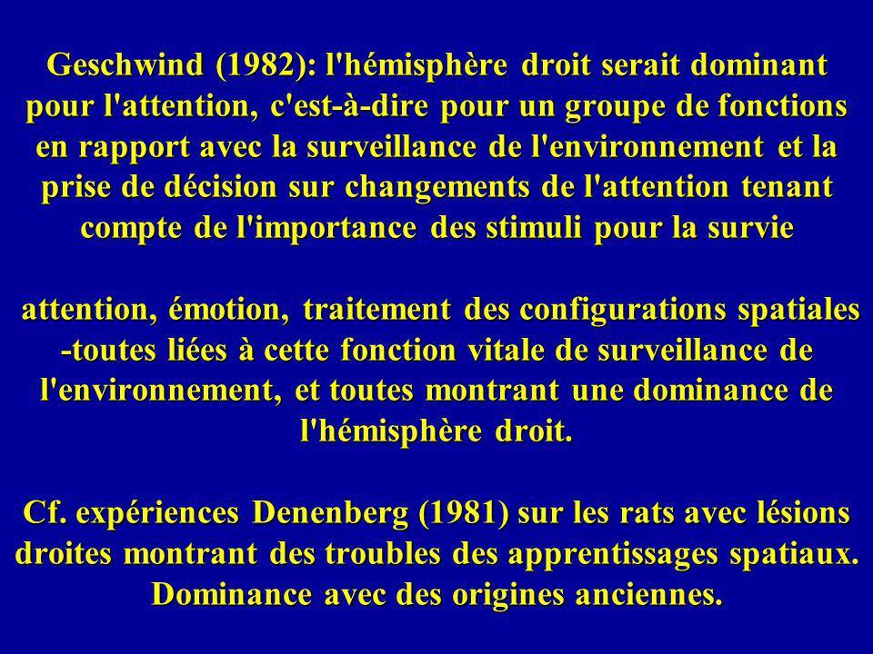 Geschwind (1982): l'hémisphère droit serait dominant pour l'attention, c'est-à-dire pour un groupe de fonctions en rapport avec la surveillance de l'e