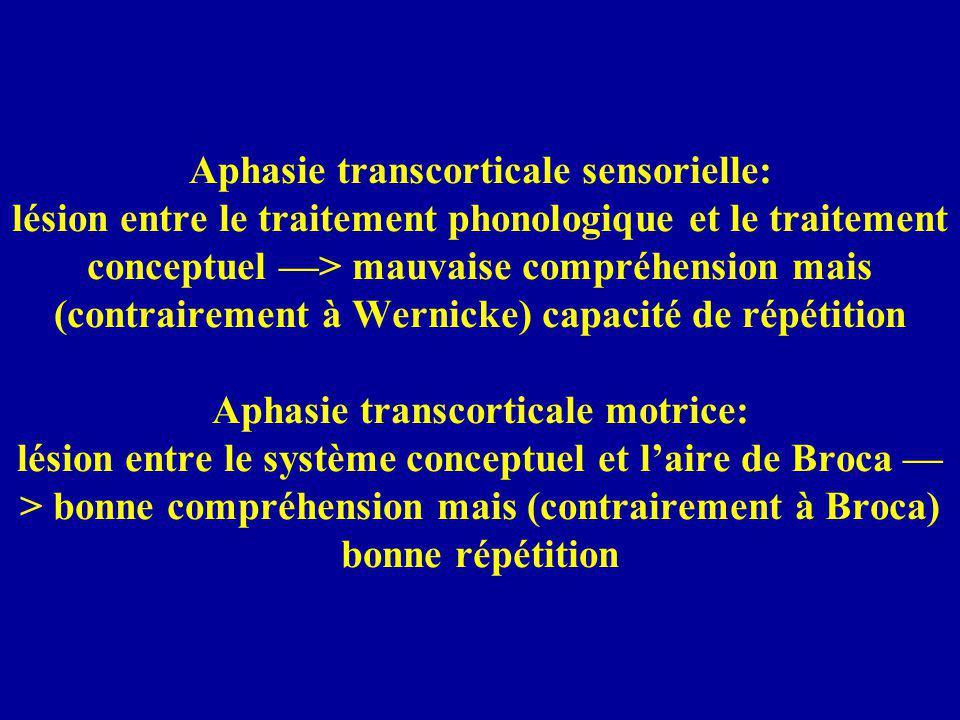Aphasie transcorticale sensorielle: lésion entre le traitement phonologique et le traitement conceptuel > mauvaise compréhension mais (contrairement à Wernicke) capacité de répétition Aphasie transcorticale motrice: lésion entre le système conceptuel et laire de Broca > bonne compréhension mais (contrairement à Broca) bonne répétition
