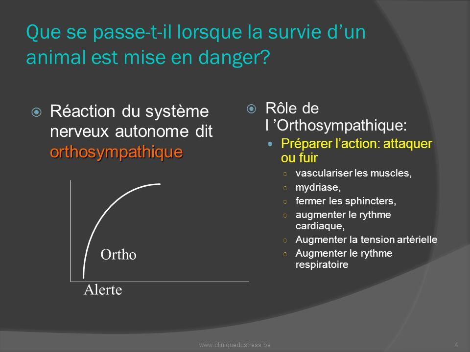 Que se passe-t-il lorsque la survie dun animal est mise en danger? orthosympathique Réaction du système nerveux autonome dit orthosympathique Rôle de