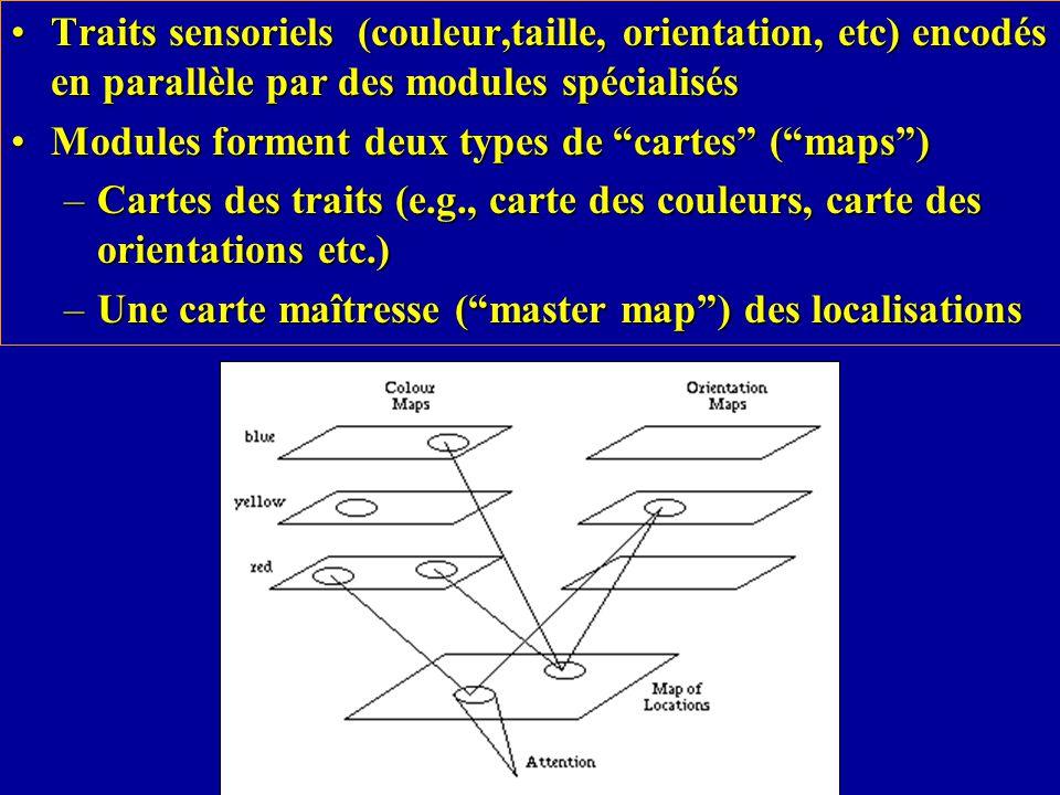 Traits sensoriels (couleur,taille, orientation, etc) encodés en parallèle par des modules spécialisésTraits sensoriels (couleur,taille, orientation, etc) encodés en parallèle par des modules spécialisés Modules forment deux types de cartes (maps)Modules forment deux types de cartes (maps) –Cartes des traits (e.g., carte des couleurs, carte des orientations etc.) –Une carte maîtresse (master map) des localisations